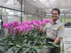 Dirjen Hortikultura