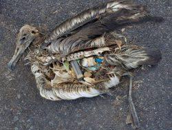 Plastik dan Ecosophy (Habis-2)