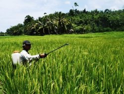 Perizinan Dimudahkan, Ekspor Pertanian Meningkat Tajam