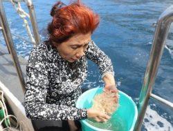 Menteri Susi Ungkap Fakta Larangan Penangkapan Benih Lobster