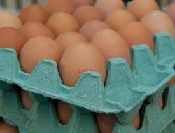 Strategi Kementan dalam Stabilisasi Harga Telur Ayam Ras