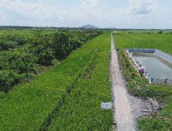 Pandemi Corona, Kemendikbud: Kontribusi IPB Dalam Ketahanan Pangan Sangat Vital