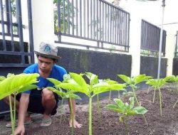 Omset Rp 150 Juta, Petani Milenial Rahmat Yogi Kembangkan Pertanian Organik