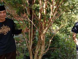 Kisah Sukses Alumni IAIN Syekh Nurjati Tanam Anggur Brazil di Majalengka