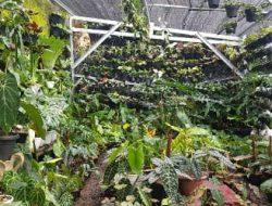 Bogor Bersiap Diri Rambah Ekspor Florikultura