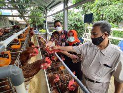 Kementan Kembangkan Pertanian Terpadu Melalui Program P4S