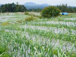 Terkait Food Sustainaible Index, Rektor IPB: Indikator Ketahanan Pangan Kita Memang Lebih Unggul