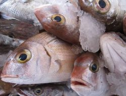 6 Hal Penting Memilih Ikan dengan Kualitas Baik