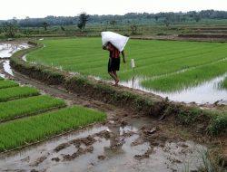 Kemenko Perekonomian: Anggaran Pertanian Harus Diperkuat, Jadi Motor Penggerak Perekonomian