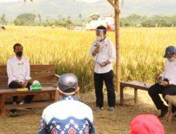 Panen Raya di Malang, Produksi Padi Memuaskan