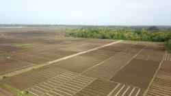 Kementan Akan Bangun Kembali Food Estate Berbasis Hortikultura