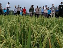 RPIK Dorong Dorong Peningkatan Indeks Pertanaman di Lahan Tadah Hujan Blora