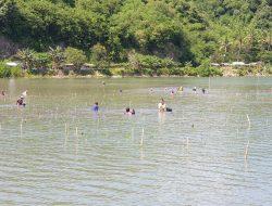 Jaga Ekosistem, KKP Tanam Mangrove di Pesisir Lombok
