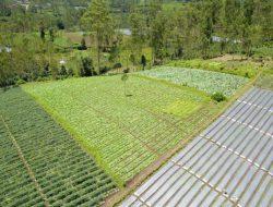 Kembangkan Kampung Hortikultura, Kementan Perlu Bersinergi dengan Petani dan Penyuluh