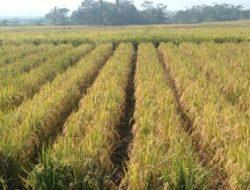Kementan Akan Gelar Merdeka Ekspor, Apkasi Dorong Optimalkan Potensi Produk Pertanian