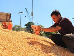 KTNA: Stabilisasi Harga Pakan dan Telur, Ini Solusinya