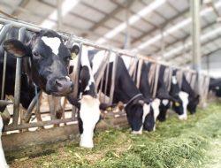 Kementan Berkomitmen Kembangkan Produksi Susu Segar Dalam Negeri